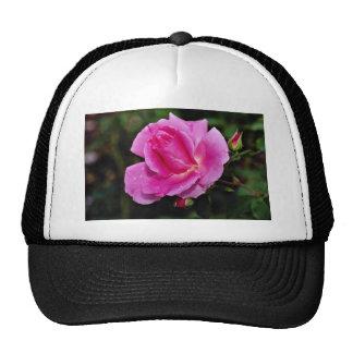 Carefree Beauty Shrub Rose 'Bucbi' White flowers Hat