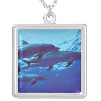 Caribbean, Bahamas Spotted dolphins Square Pendant Necklace
