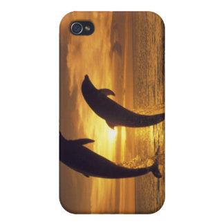 Caribbean, Bottlenose dolphins Tursiops 16 iPhone 4 Case