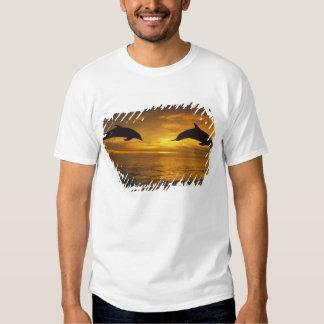 Caribbean, Bottlenose dolphins Tursiops 17 T Shirt