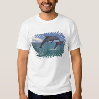 Caribbean, Bottlenose dolphins Tursiops 6 Tshirts