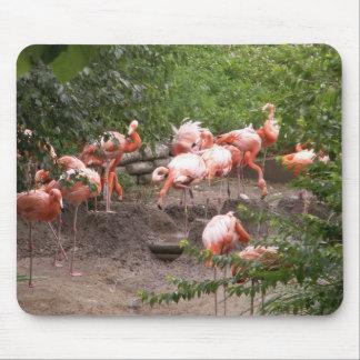 Caribbean Flamingo  Mousepad