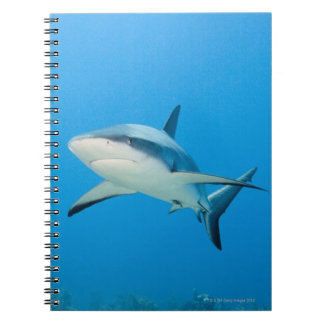 Caribbean reef shark (Carcharhinus perezi) Notebook