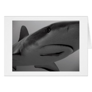 Caribbean Reef Shark Card