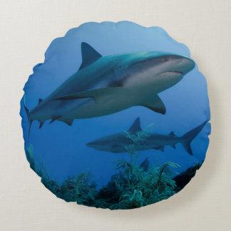 Caribbean Reef Shark Jardines de la Reina Round Cushion