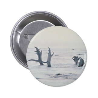 Caribou antlers in snow pinback button