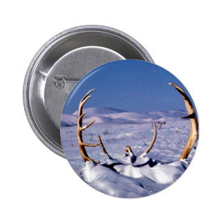 Caribou antlers in the snow pins