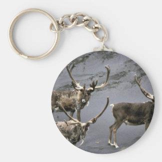 Caribou bulls in velvet key ring