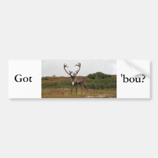 Caribou In Denali Bumper Sticker