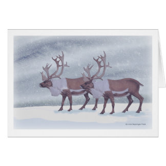 Caribou Reindeer in the Snow Card
