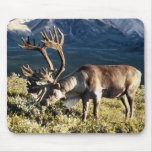 Caribou / Reindeer Lovers Mouse Pads