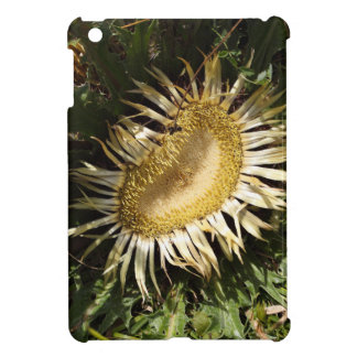 Carline thistle (Carlina acanthifolia) iPad Mini Cover