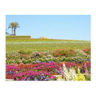 Carlsbad Flower Fields Postcard