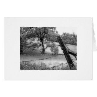 Carmel Valley Oak Tree Card