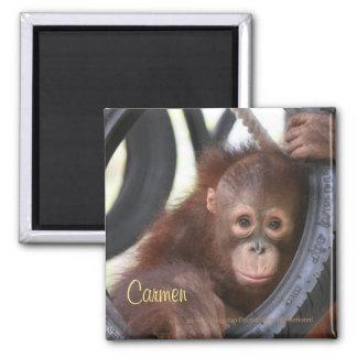 Carmen Orangutan Orphan at OFI Care Center Magnet
