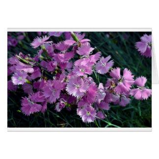 Carnation Greeting Card