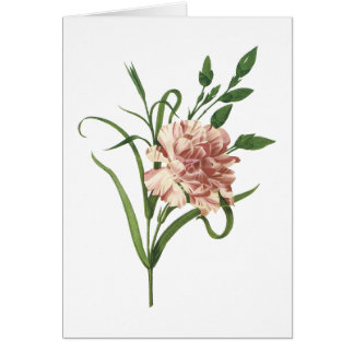 carnation(Dianthus caryophyllus) by Redouté Card