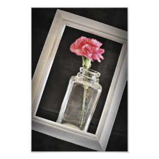 Carnation Framed Photo Print
