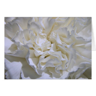 Carnation Greeting Card