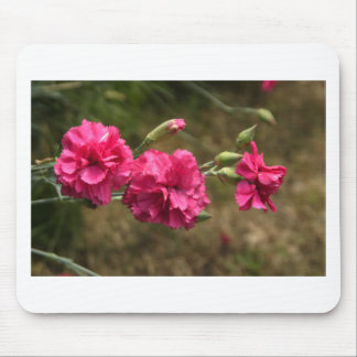 carnation mouse pads