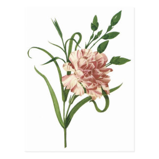 Carnation Postcards