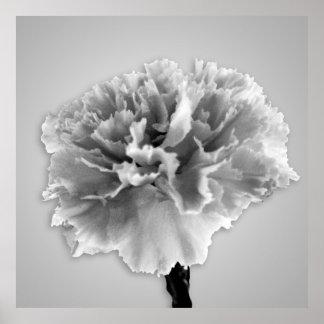 Carnation Print