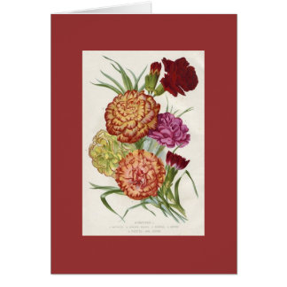 Carnations Greeting Cards