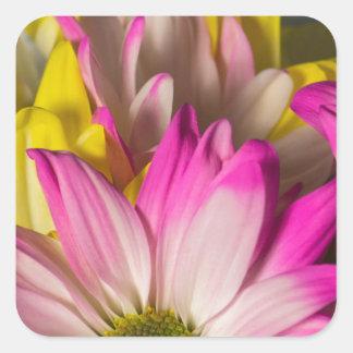 Carnations Square Sticker
