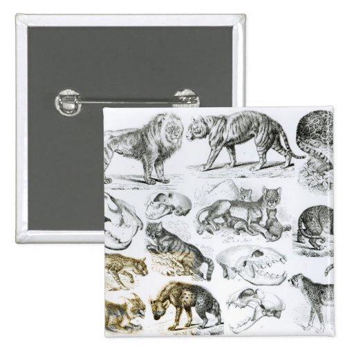 Carnivorous Animals Pinback Buttons
