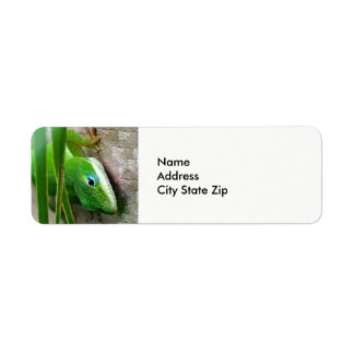 Carolina Anole 152 Return Address Label