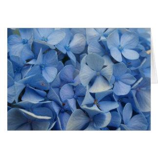Carolina Blue Card