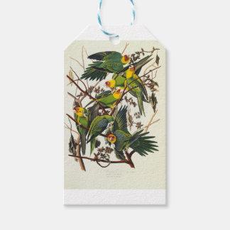 Carolina Parrot - John James Audubon (1827-1838) Gift Tags