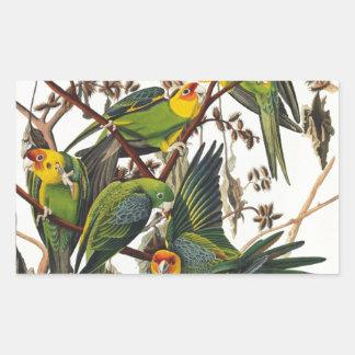 Carolina Parrot - John James Audubon (1827-1838) Rectangular Sticker