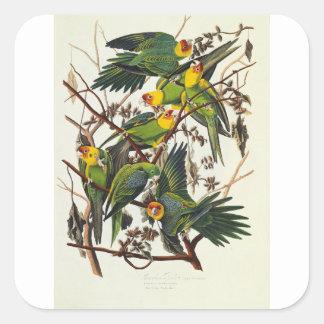 Carolina Parrot - John James Audubon (1827-1838) Square Sticker