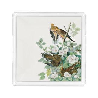 Carolina Turtle Dove, Birds of America by John Jam Acrylic Tray