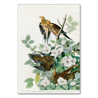 Carolina Turtle Dove, Birds of America by John Jam Card