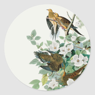 Carolina Turtle Dove, Birds of America by John Jam Classic Round Sticker