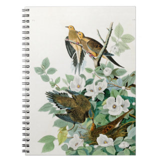 Carolina Turtle Dove, Birds of America by John Jam Notebook