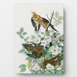 Carolina Turtle Dove, Birds of America by John Jam Plaque