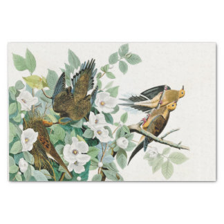 Carolina Turtle Dove, Birds of America by John Jam Tissue Paper