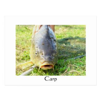 Carp - Karpfen - Ponty Postcard