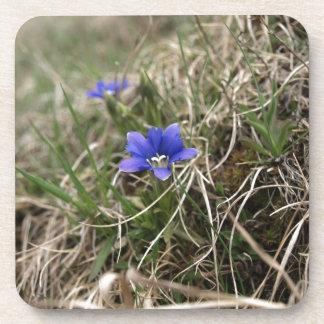 Carpathian Flower Coasters