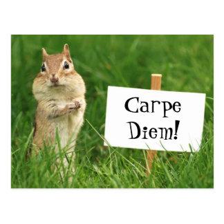 Carpe Diem Chipmunk with Sign Postcard