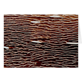 Carpenter ant - back card