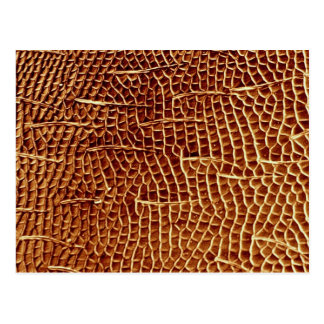 Carpenter ant - cheek postcard
