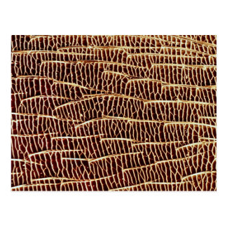 Carpenter ant - side post card