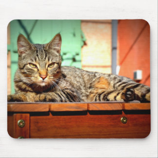 Carpet mouse tabby cat on a garden table mouse pad