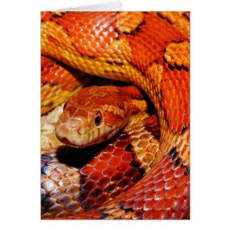 Carpet Snake Card