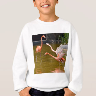 Carribean flamingos in water sweatshirt