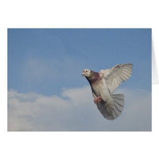 Carrier pigeon in flight card